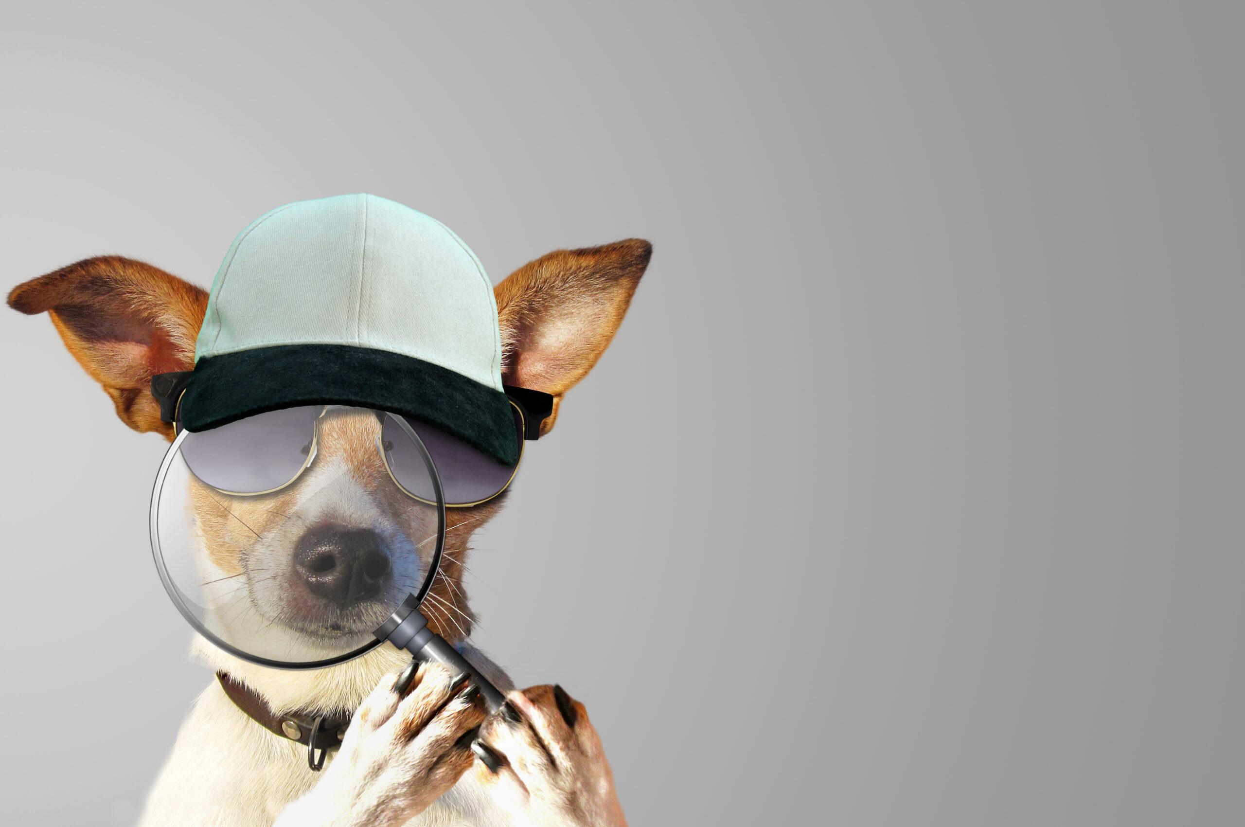 Photo humoristique d'un chien détective avec une loupe pour débusquer les punaises de lit